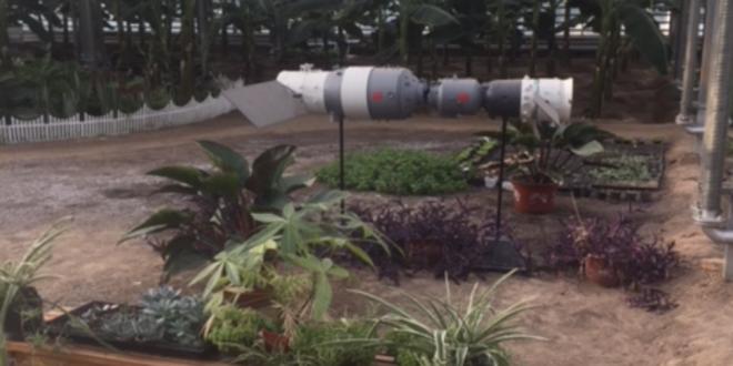 La Chine utilise la technologie des satellites pour envoyer des graines dans l'espace, puis de semer sur terre les plantes «mutantes» obtenues.