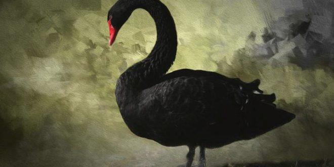 le « Cygne noir » : Livre de Nassim Nicholas Taleb